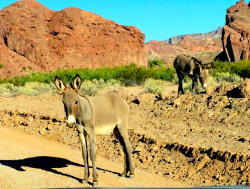 At dusk, wild donkeys came down to the river for a drink.