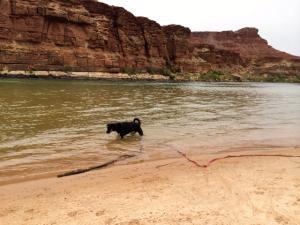 Maya swimming at the beach.