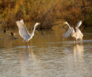 This part of the river is very important for migratory birds.